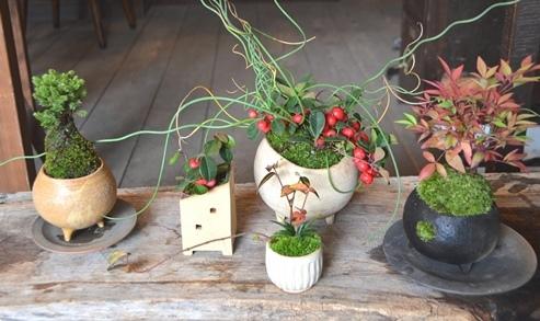 冬の盆栽 新入荷のご案内_d0263815_15573017.jpg