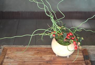 冬の盆栽 新入荷のご案内_d0263815_15581534.jpg