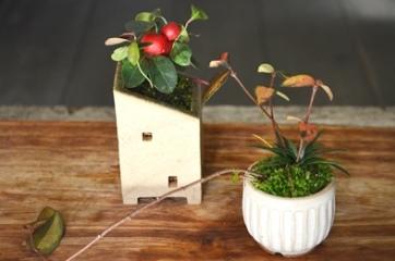 冬の盆栽 新入荷のご案内_d0263815_160789.jpg
