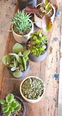冬の盆栽 新入荷のご案内_d0263815_1614843.jpg
