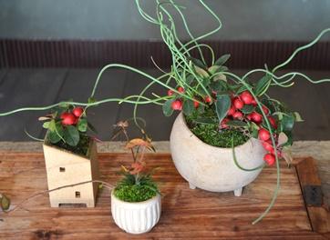 冬の盆栽 新入荷のご案内_d0263815_1618277.jpg