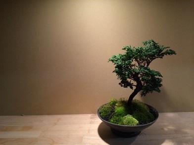 冬の盆栽 新入荷のご案内_d0263815_1624714.jpg