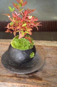 冬の盆栽 新入荷のご案内_d0263815_1652190.jpg