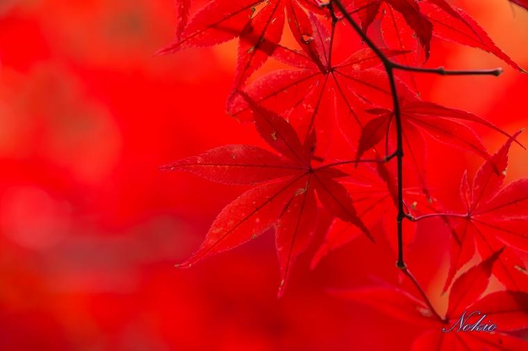 f0173817_20103224.jpg