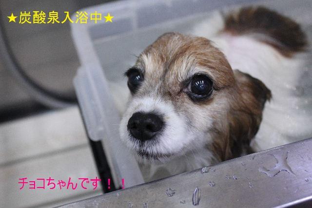 b0130018_7112012.jpg