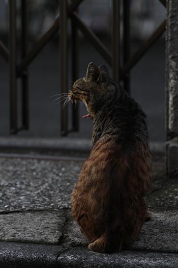[猫的]野獣_e0090124_0271222.jpg