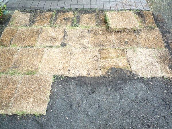 2014年11月30日 庭の芝張り作業 ③_b0341140_13162931.jpg