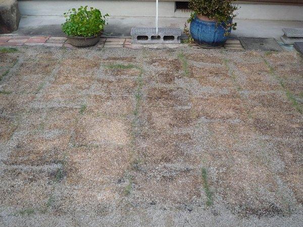 2014年11月30日 庭の芝張り作業 ③_b0341140_13181083.jpg