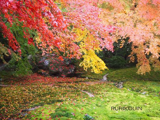 そして京都へ_e0158653_2421360.jpg