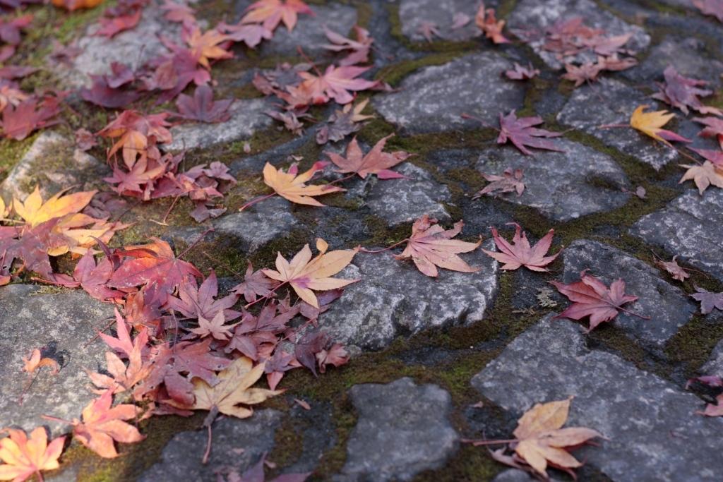 11月30日 最後の紅葉かな・・・_a0023466_22032841.jpg