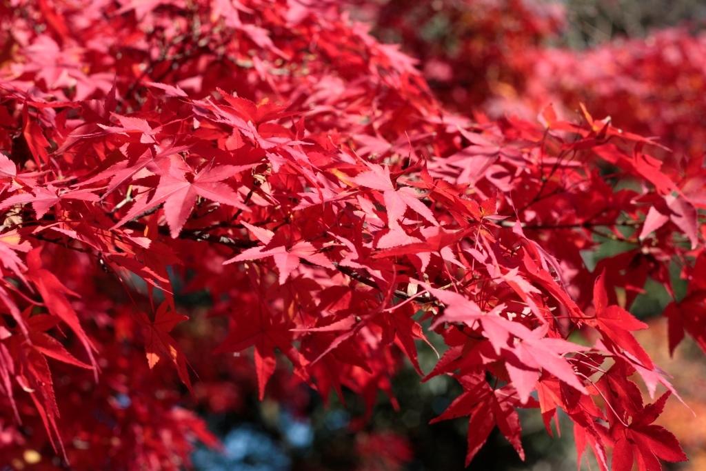 11月30日 最後の紅葉かな・・・_a0023466_22040880.jpg