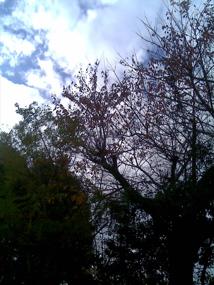 天気は下り坂で明日雨で、あさってから晴れ予報だが_d0061678_22464367.jpg