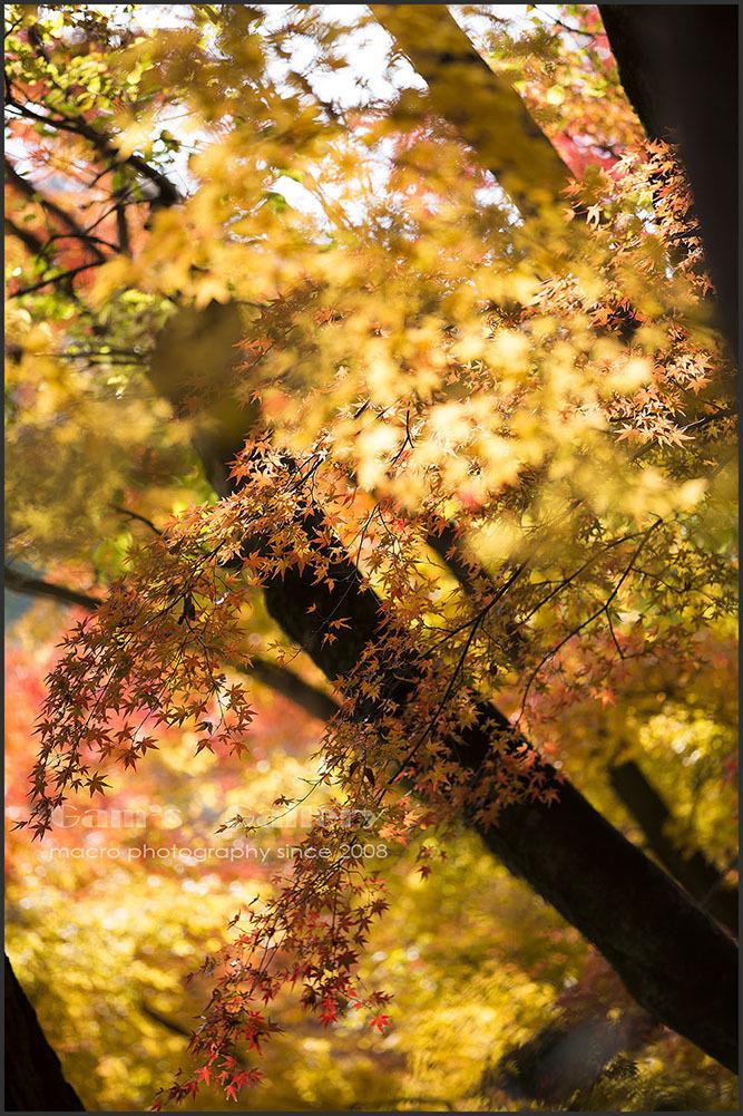 Gorld Autumn_f0195893_09403003.jpg