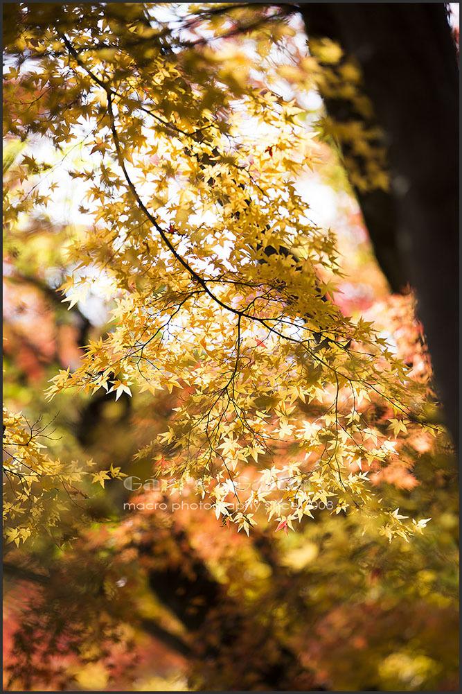 Gorld Autumn_f0195893_09405453.jpg