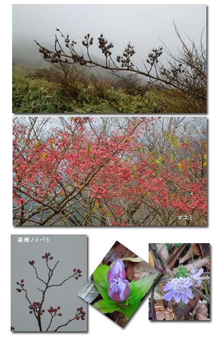 箱根 明神ヶ岳へ_c0051105_233586.jpg