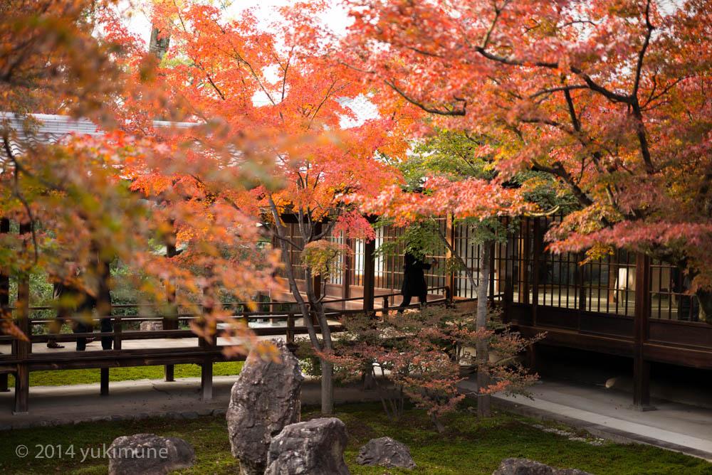 京都 建仁寺_d0192712_19464374.jpg