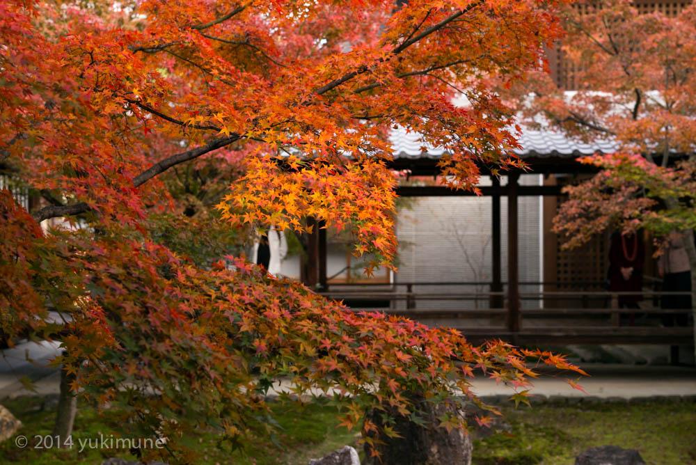 京都 建仁寺_d0192712_1947697.jpg
