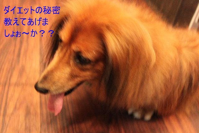 b0130018_16533515.jpg