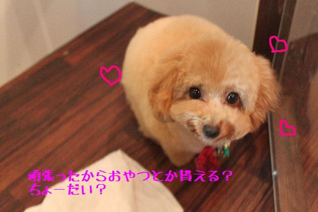 b0130018_1656068.jpg
