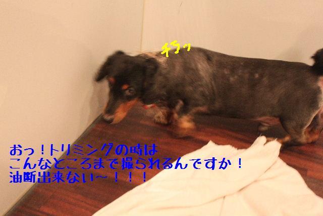 b0130018_165868.jpg