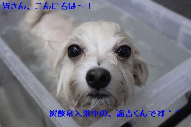 b0130018_17103648.jpg