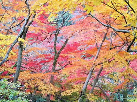 秋も終わり・・・_b0177436_16272431.jpg