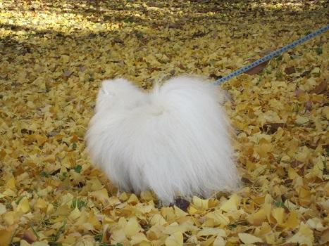 秋も終わり・・・_b0177436_1630894.jpg