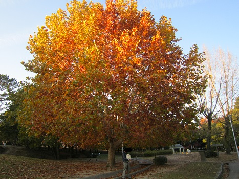 秋も終わり・・・_b0177436_16382815.jpg