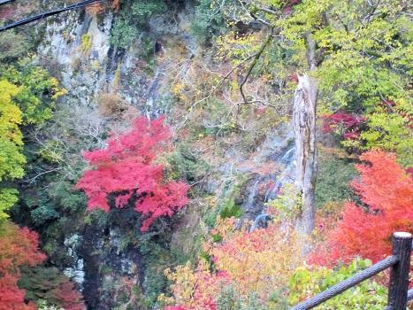 秋も終わり・・・_b0177436_1658127.jpg