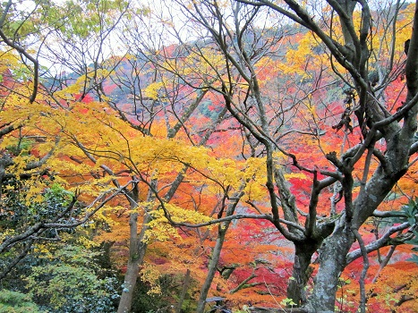 秋も終わり・・・_b0177436_1724241.jpg
