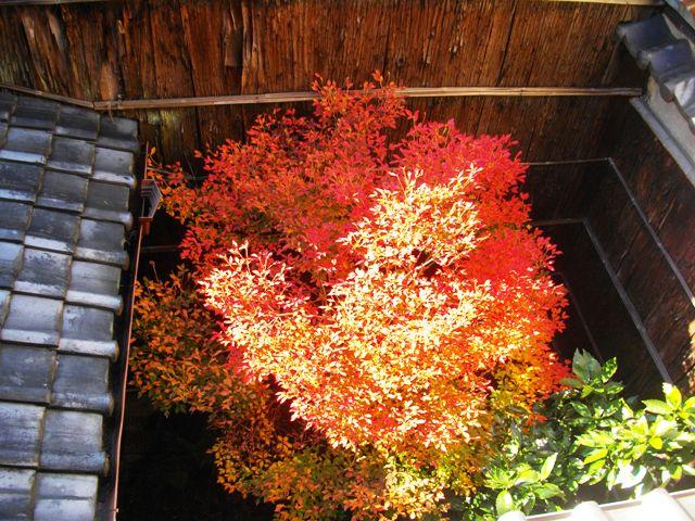 秋の坪庭上空_e0230141_17265125.jpg