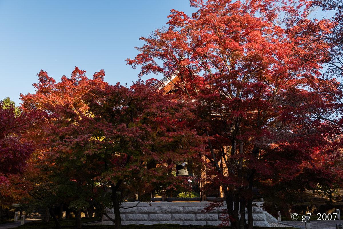 京都の紅葉 2014 〜智積院〜_f0152550_21444753.jpg