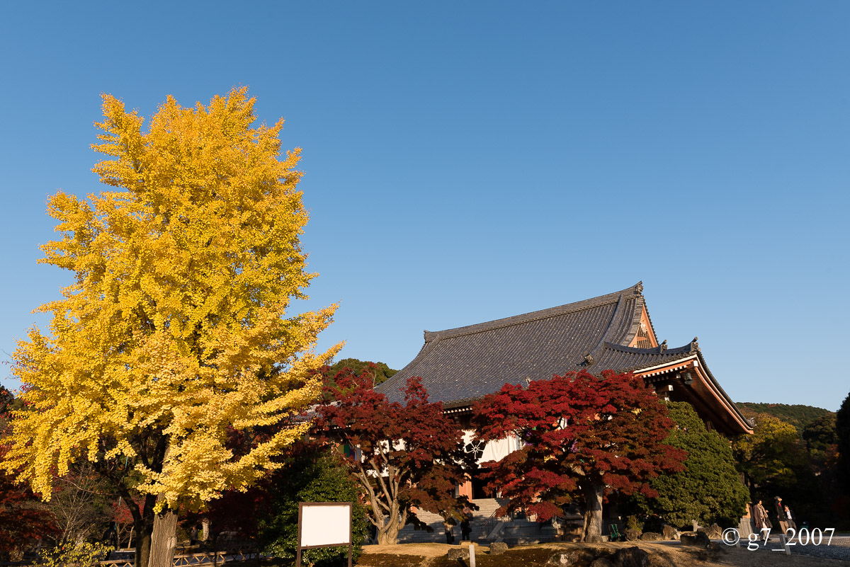 京都の紅葉 2014 〜智積院〜_f0152550_21453382.jpg