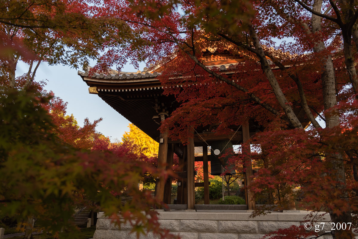京都の紅葉 2014 〜智積院〜_f0152550_21462613.jpg