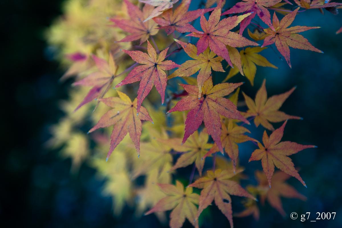 京都の紅葉 2014 〜智積院〜_f0152550_21464643.jpg