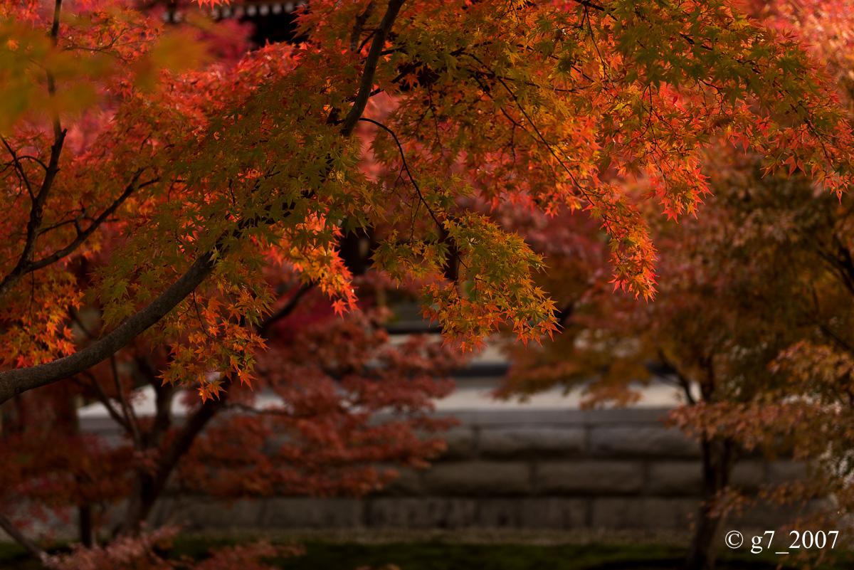 京都の紅葉 2014 〜智積院〜_f0152550_21474169.jpg
