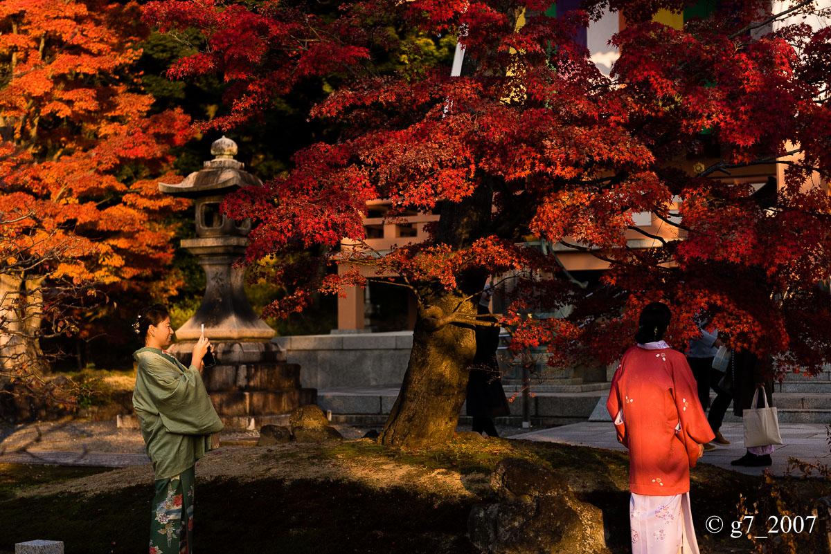 京都の紅葉 2014 〜智積院〜_f0152550_21482735.jpg