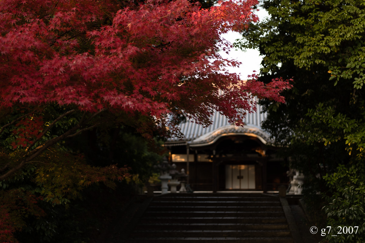京都の紅葉 2014 〜智積院〜_f0152550_21484744.jpg