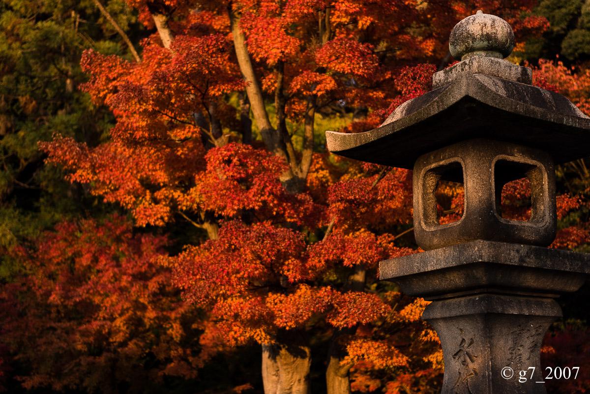 京都の紅葉 2014 〜智積院〜_f0152550_21493083.jpg