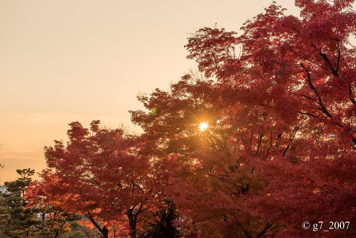 京都の紅葉 2014 〜智積院〜_f0152550_21494938.jpg