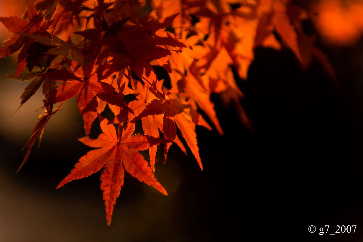 京都の紅葉 2014 〜智積院〜_f0152550_21502782.jpg