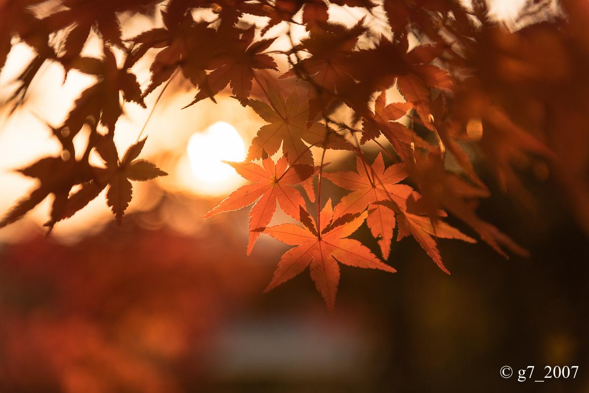 京都の紅葉 2014 〜智積院〜_f0152550_21505214.jpg