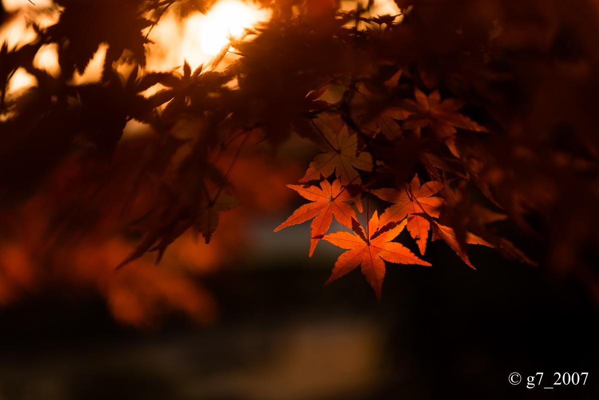 京都の紅葉 2014 〜智積院〜_f0152550_2150893.jpg