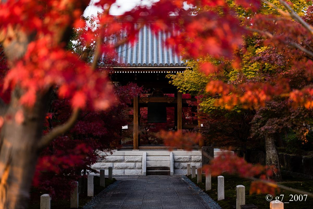 京都の紅葉 2014 〜智積院〜_f0152550_2151967.jpg