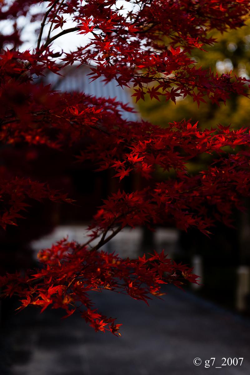 京都の紅葉 2014 〜智積院〜_f0152550_21522432.jpg