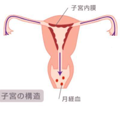 子宮内膜とは_b0328361_2149289.jpg
