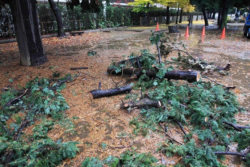 これが剪定でしょうか? ~福岡中央公園の木々~_a0107574_17145336.jpg