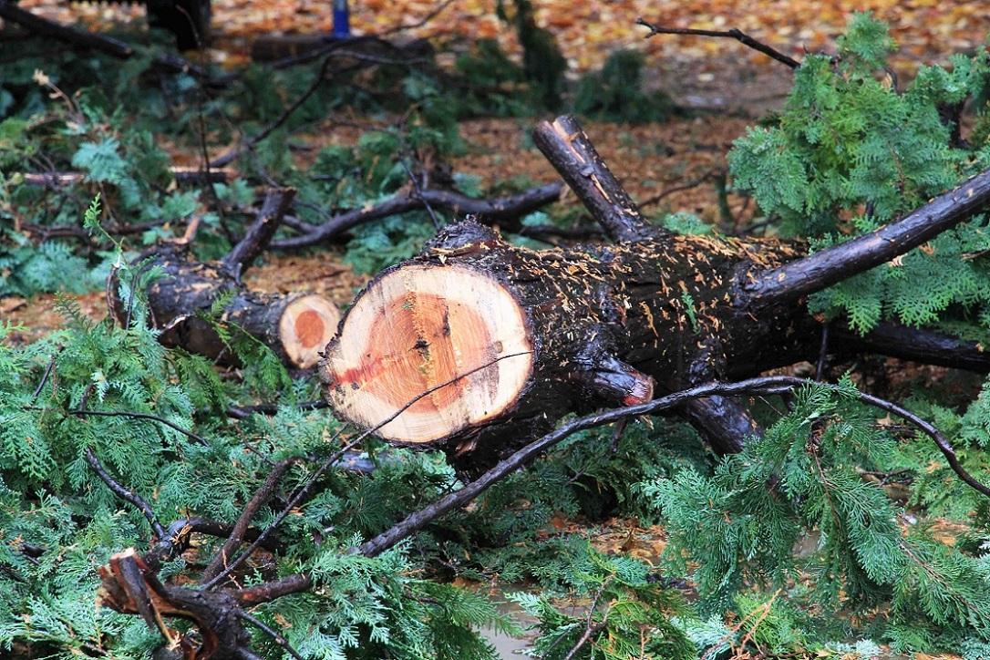 これが剪定でしょうか? ~福岡中央公園の木々~_a0107574_17150055.jpg