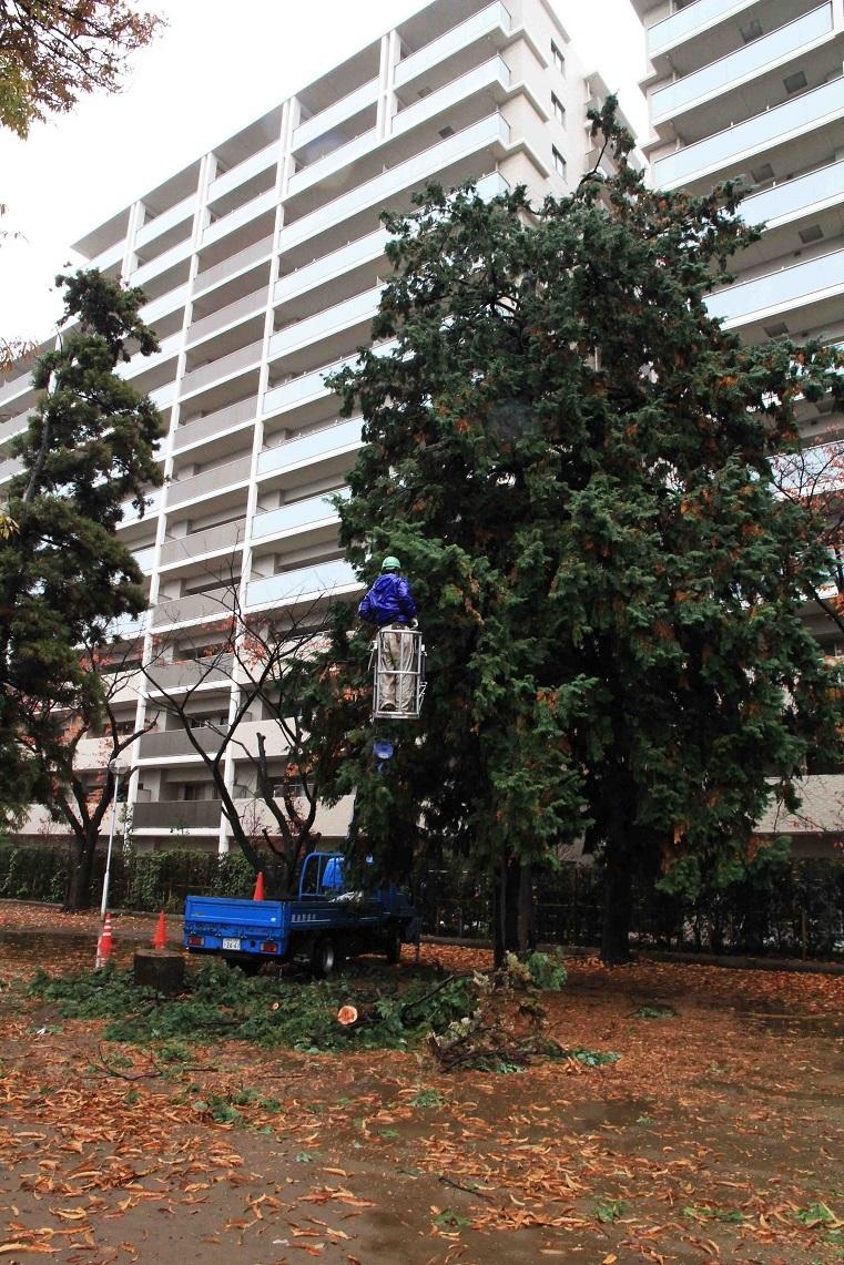 これが剪定でしょうか? ~福岡中央公園の木々~_a0107574_17151081.jpg