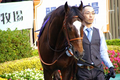 超豪華メンバーのジャパンCは、菊花賞馬エピファネイアが衝撃の圧勝で復活V_b0015386_0283342.jpg